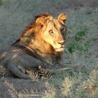 Nyakasanga Hunting Safaris