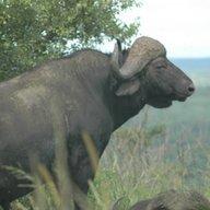 MontanaINAfrica