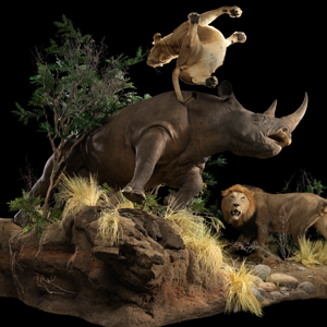 Black Rhino Mount