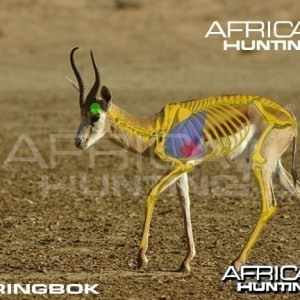 Bowhunting Springbok Shot Placement