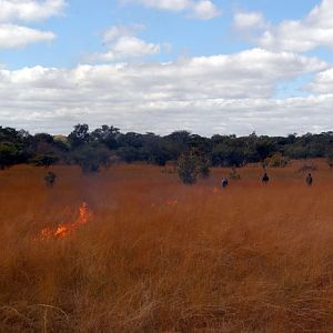 Zambia Bush Fire