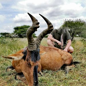 Red Hartebeest Hunting South Africa