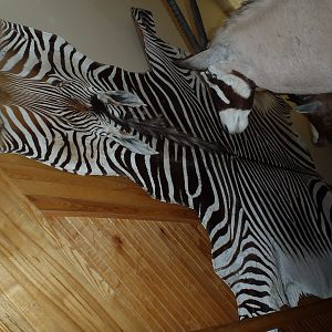 Hartmann's Mountain Zebra Rug Taxidermy