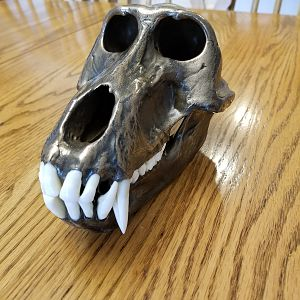 Bronzed Yellow Baboon Skull Taxidermy
