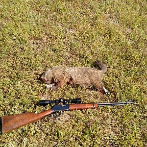 USA Hunt Groundhog