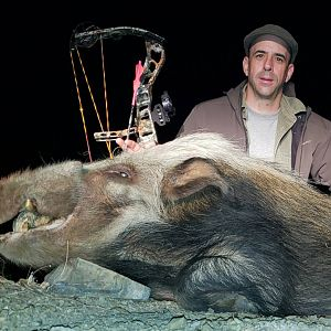 Bow Hunt Bushpig in South Africa