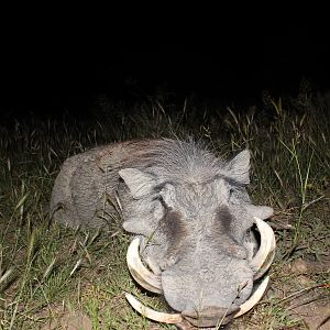 Good old Warthog taken with the bow