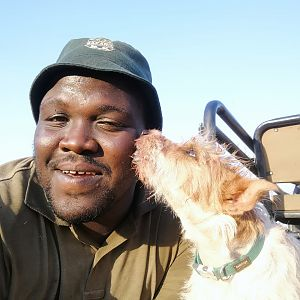 Our Tracker Hunting Dog South Africa