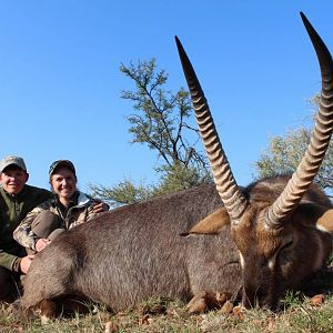 Waterbuck Hunt South Africa