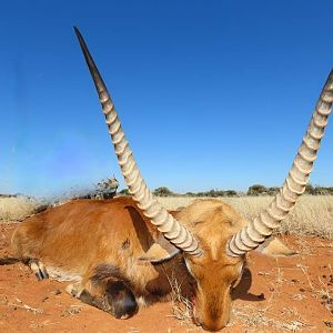 Hunting Red Lechwe in South Africa