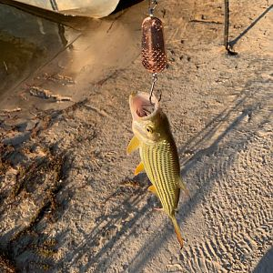 Fishing Tigerfish in Namibia