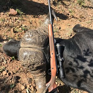 Hunting Buffalo in South Africa