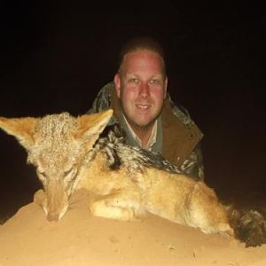 Jackal Hunting Sunset Safaris