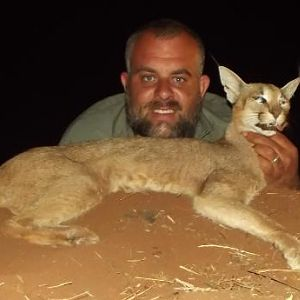 Caracal Hunting Sunset Safaris