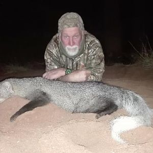 White-tailed Mongoose Hunting Sunset Safaris