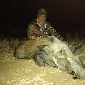 Bushpig Hunting Sunset Safaris