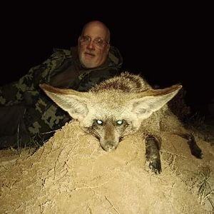 Bat-eared Fox Hunting Sunset Safaris