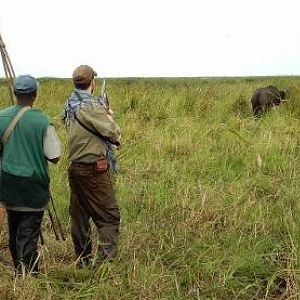 Hunting Buffalo in the Zambezi Delta