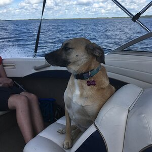Bailey on her first boat ride