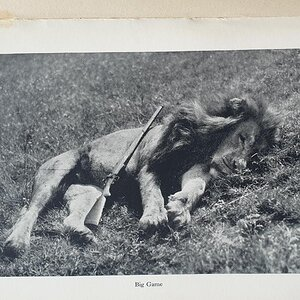 Hunting Lion from the book African Hunter by Bror von Blixen-Finecke
