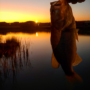 Bass Fishing South Africa