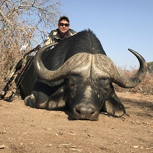 Bow Hunt Cape Buffalo in South Africa