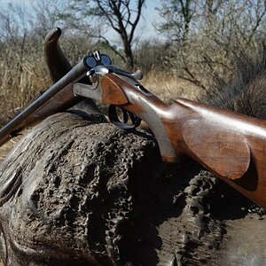 Buffalo Hunt with JKO Safaris