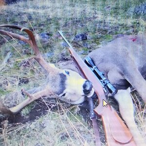 Hunting Mule Deer in USA