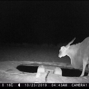 Trail Cam Pictures of Eland in Namibia