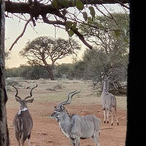 View of Kudu from Bow Hide