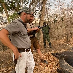 Zambia Hunting Buffalo
