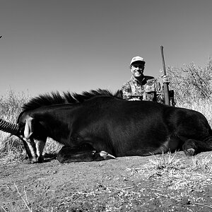 South Africa Hunt Sable Antelope
