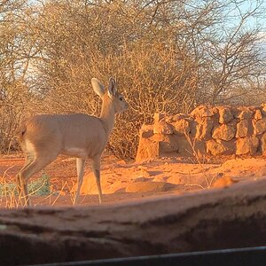 View of Steenbok from Hunting blind