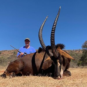 Sable Antelope Hunt South Africa