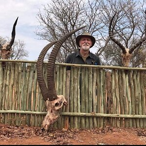 South Africa Hunting Bushbuck, Sable & Impala