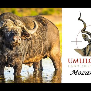 Hunting Mozambique with Umlilo Safaris