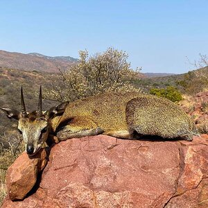 Klipspringer Hunt South Africa