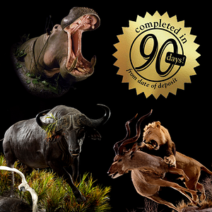 Animal Artistry's 90-Day Turnaround