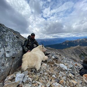 Hunt Mountain Goat in Northern British Columbia Canada