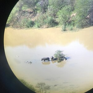 View of Hippos through the scope