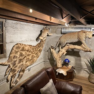 Giraffe Wall Pedestal & Leopard Full Mount Taxidermy
