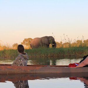 Elephant on Botswana Tour