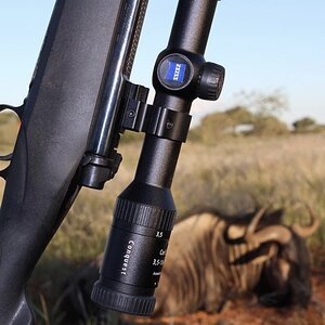 Blue Wildebeest Guided by Zana Botes