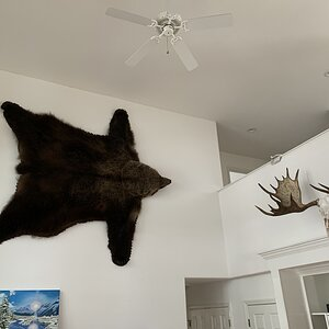 Bear Rug Taxidermy