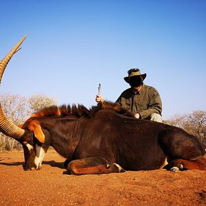 Sable Hunting South Africa