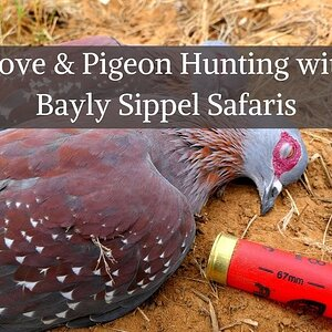Dove & Pigeon Hunting with Bayly Sippel Safaris