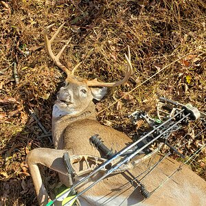 White-tailed Deer Bow Hunting USA
