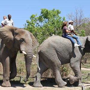 Elephant Ride South Africa