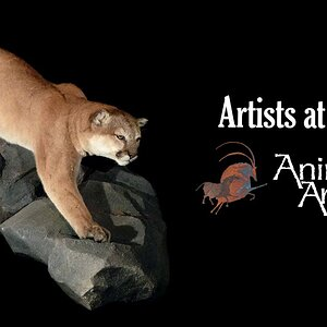 Animal Artistry - Artists at Work