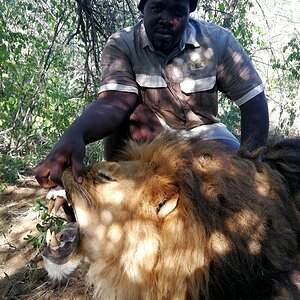 Lion Hunt South Africa
